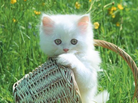 Kucing Dalam Pandangan Islam dan Kedokteran Erik At Z